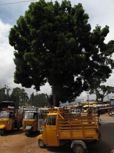 Image of Tree k019