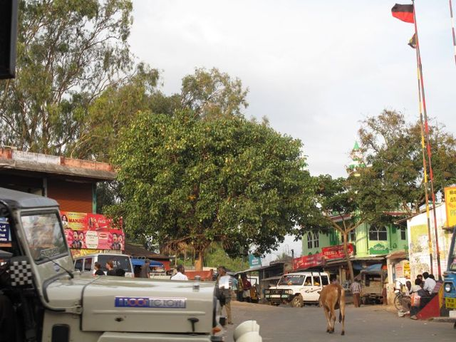 Image of Tree k020