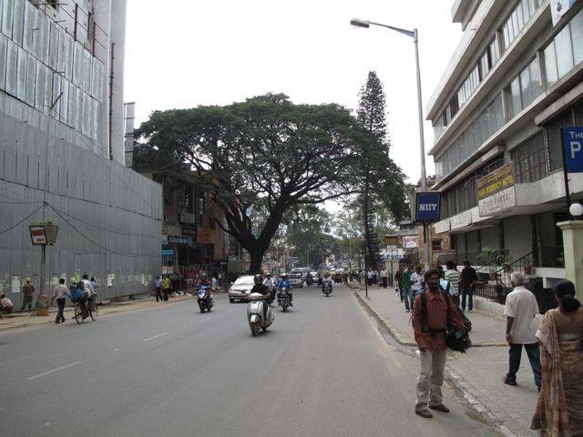 Image of Tree k021