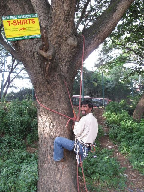 Image of Tree k024