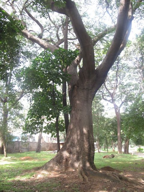 Image of Tree k025