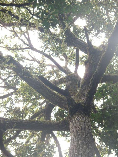 Image of Tree k030