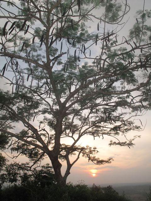 Image of Tree k042