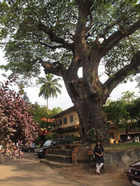 Image of Tree k046