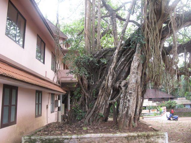 Image of Tree k047