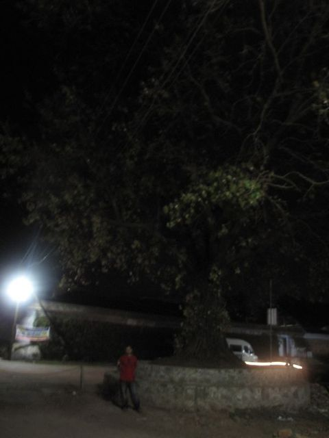 Image of Tree k049