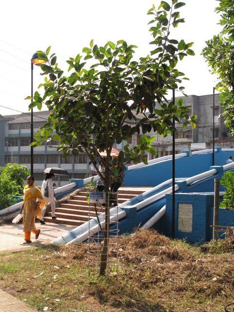Image of Tree l006