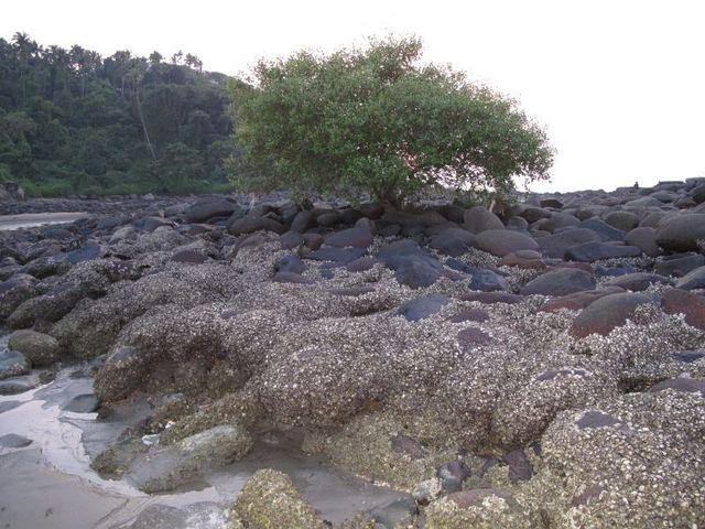 Image of Tree l015