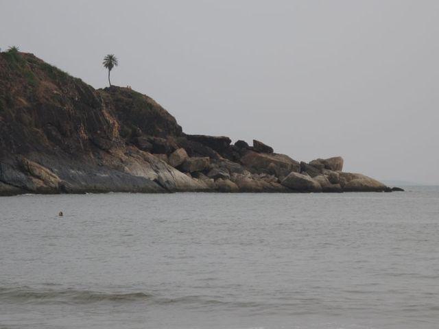Image of Tree l018
