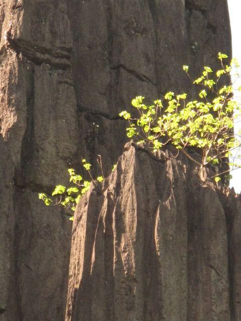 Image of Tree l022