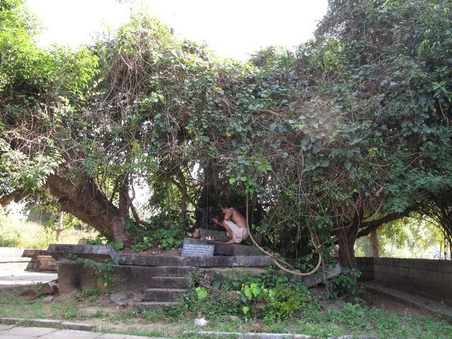 Image of Tree l029