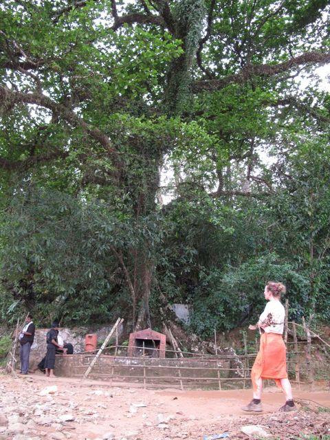 Image of Tree l036