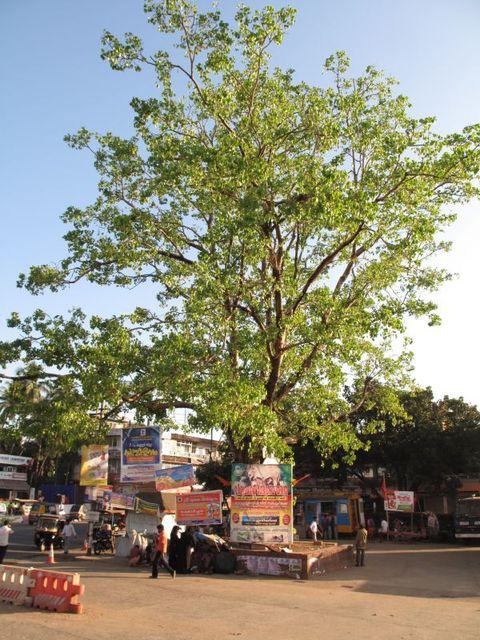 Image of Tree l037