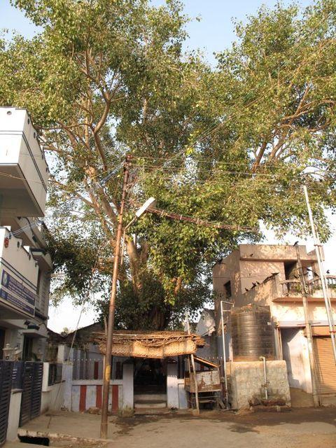 Image of Tree l038