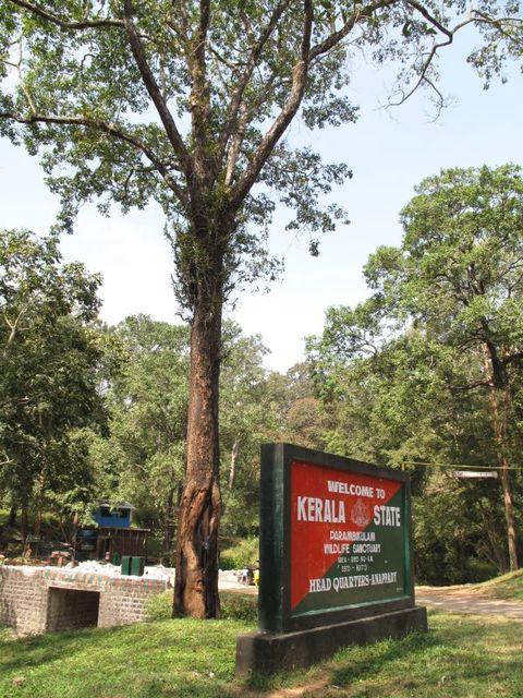 Image of Tree l039