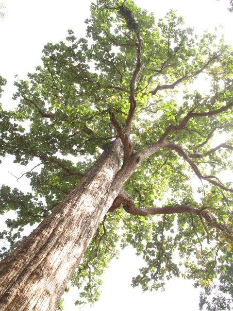 Image of Tree l040