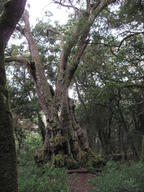 Image of Tree l043