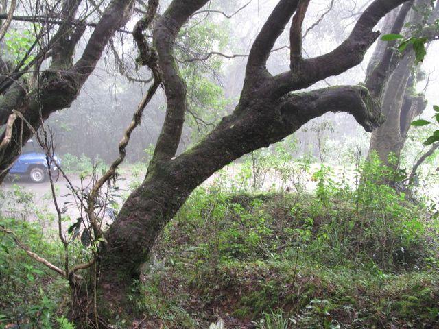 Image of Tree l045