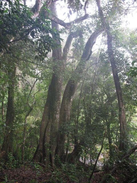 Image of Tree l047