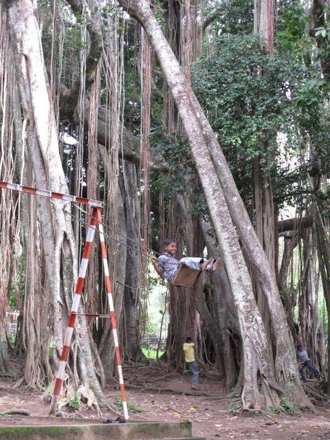 Image of Tree l051