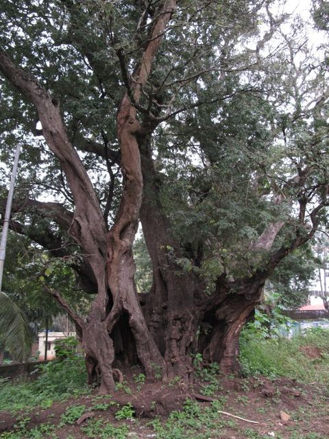 Image of Tree l054