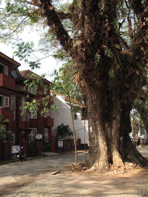 Image of Tree m002