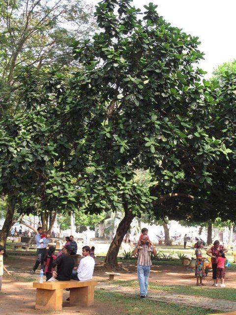 Image of Tree m003