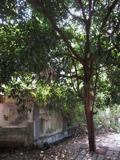 Image of Tree m005