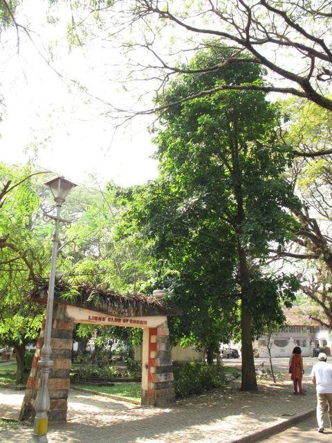 Image of Tree m007