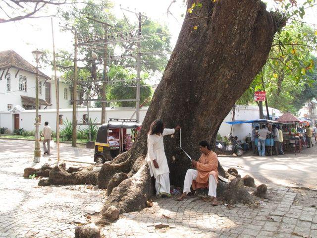 Image of Tree m008