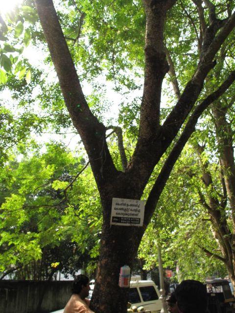 Image of Tree m010
