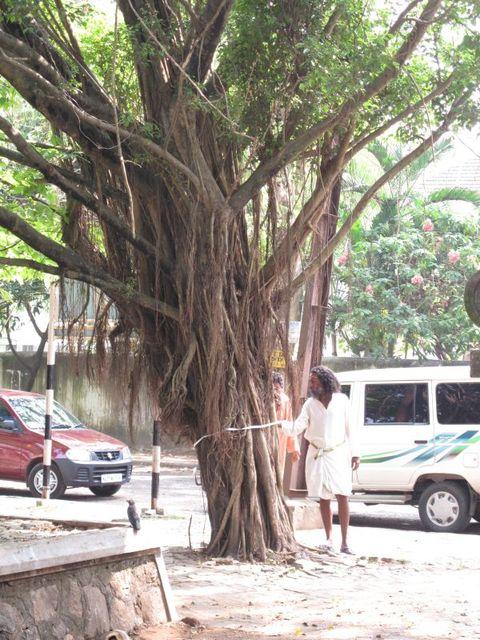 Image of Tree m011