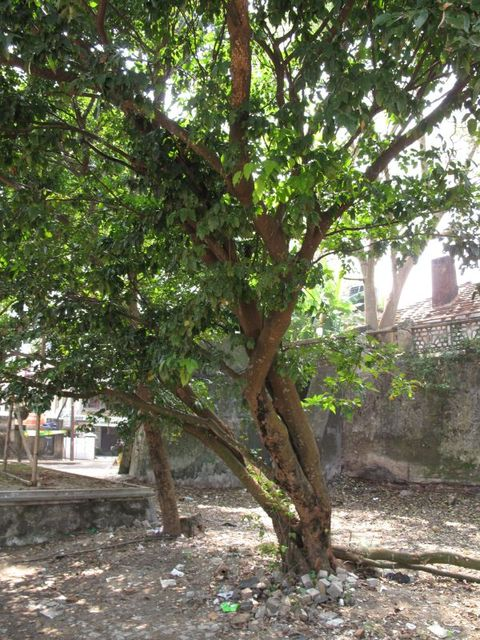 Image of Tree m013