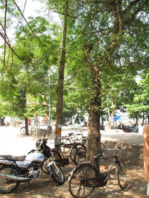 Image of Tree m014