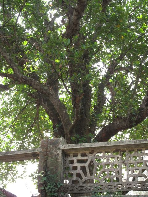 Image of Tree m017