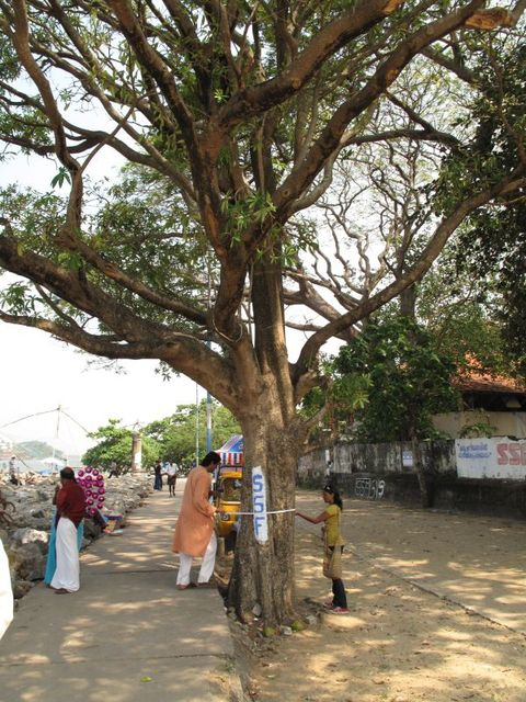 Image of Tree m019