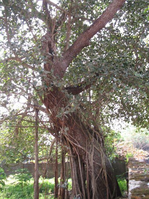 Image of Tree m020