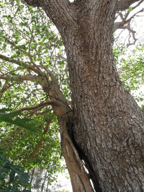 Image of Tree m021