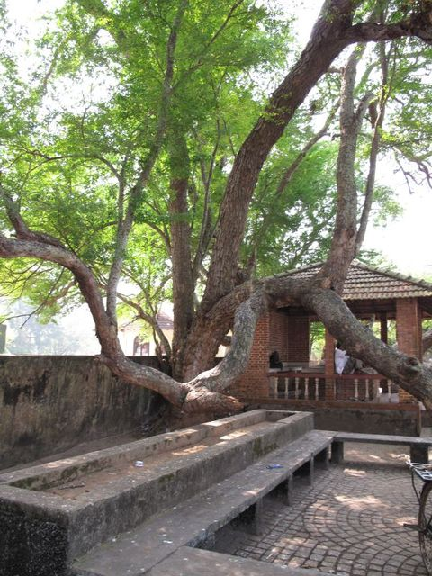 Image of Tree m022