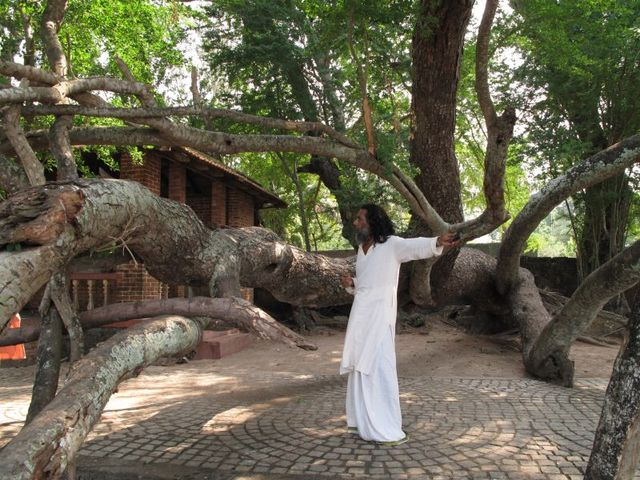 Image of Tree m023