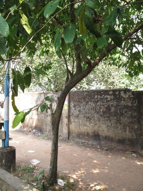 Image of Tree m024