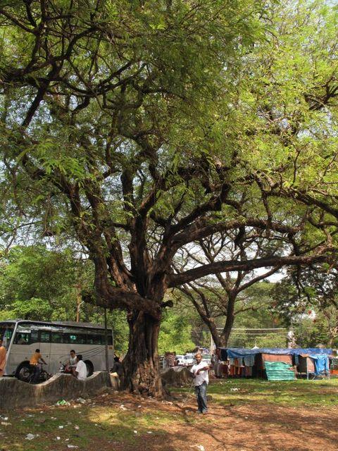 Image of Tree m031