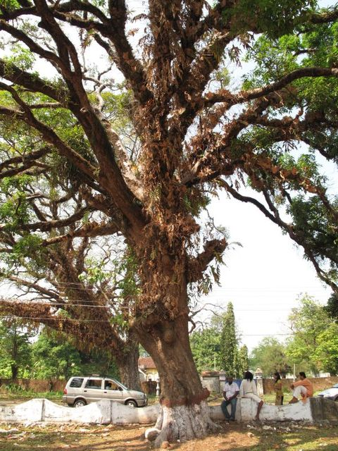 Image of Tree m032