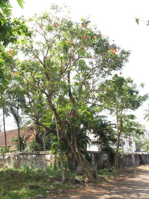 Image of Tree m033