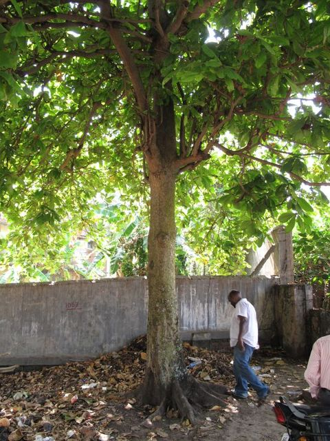 Image of Tree m041