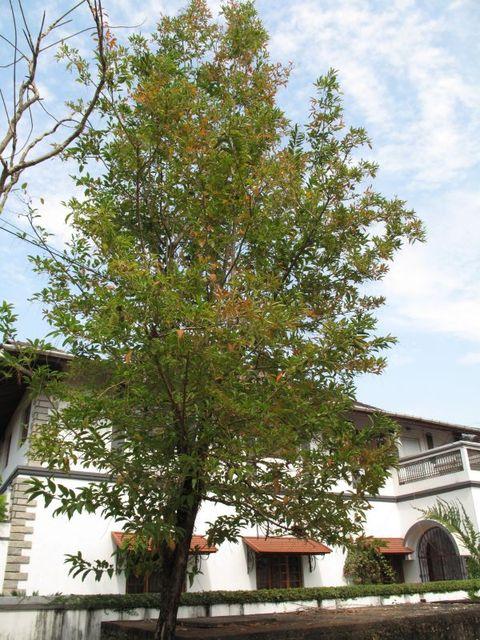Image of Tree m043