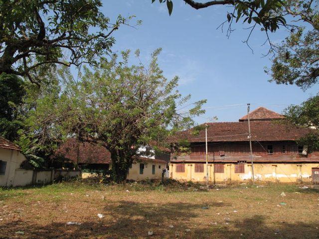 Image of Tree m045