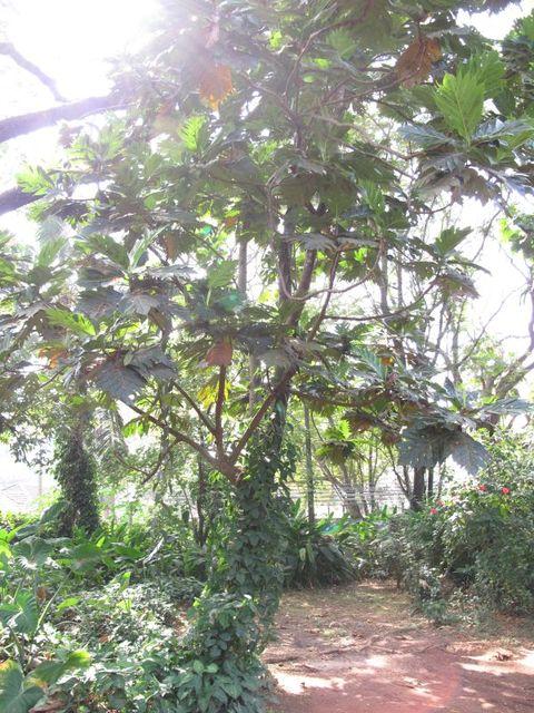 Image of Tree m046