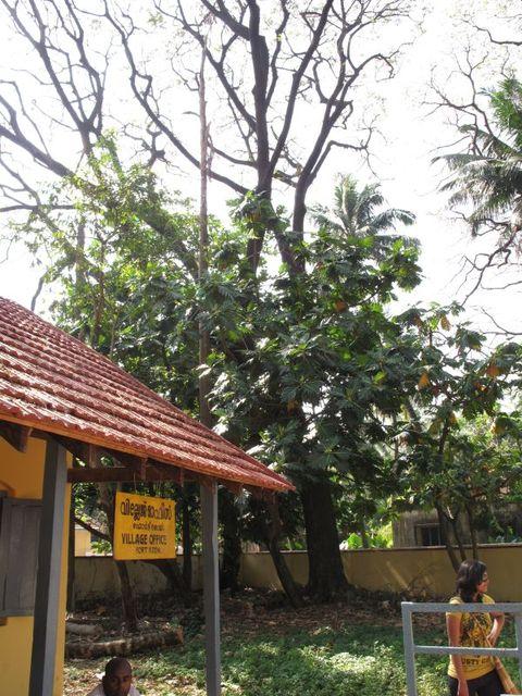 Image of Tree m050