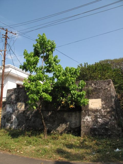 Image of Tree m051